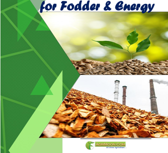 Biomass Management for Fodder and Energy