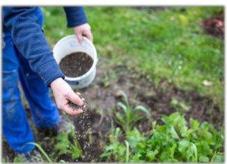 Weed Management in Horticulture Crops